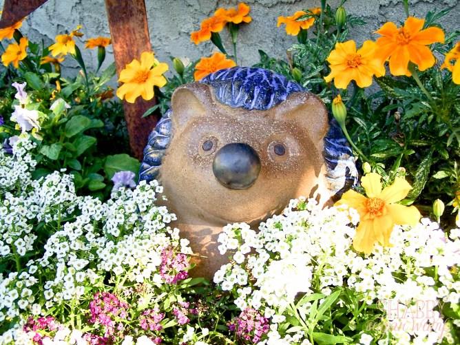 hedgehog in flowers1