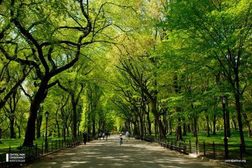 Central Park Drive