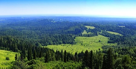 Siberian forest is one fifth of world