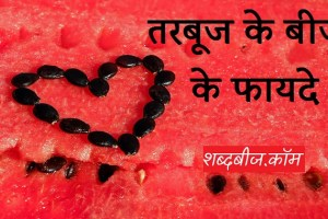 watermelon seeds in hindi