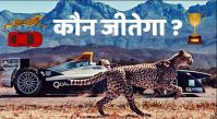 about cheetah in hindi
