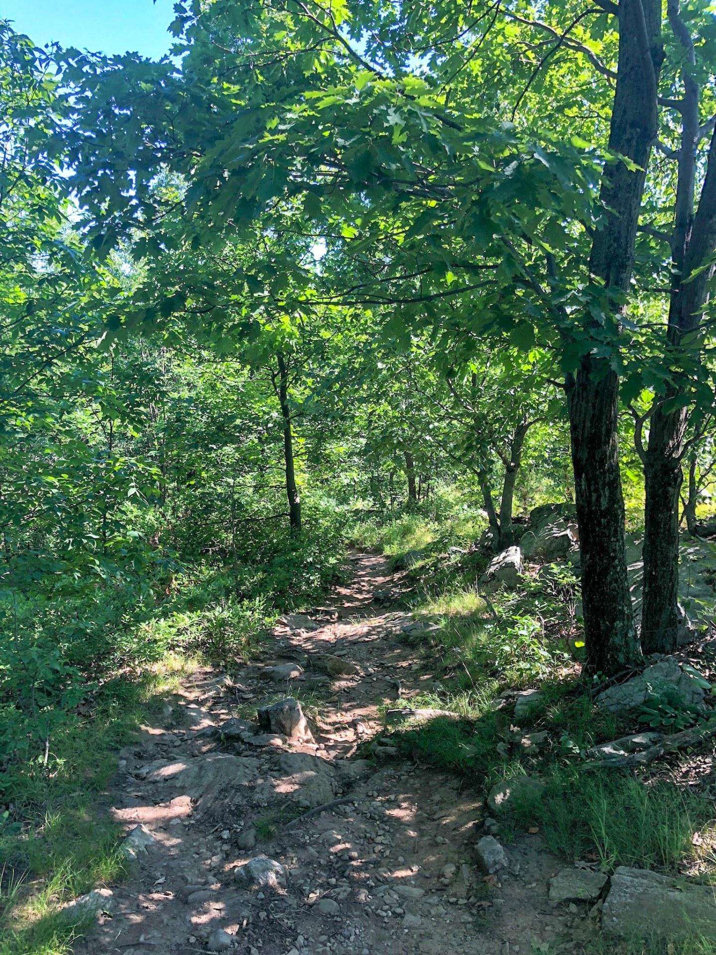 hinking ramapo forest