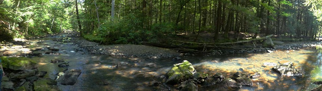 Panarama of a woodland creek