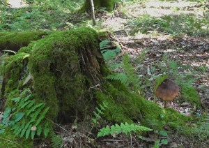 One of many types of mushrooms found on the Hemlock Trail