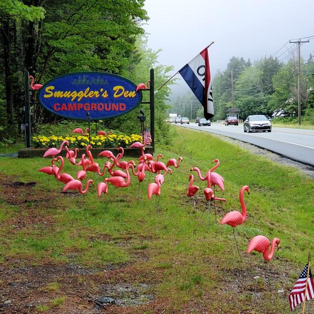 It was Flamingo Weekend in Southwest Harbor!