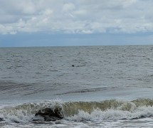 That little black dot is a dolphin!