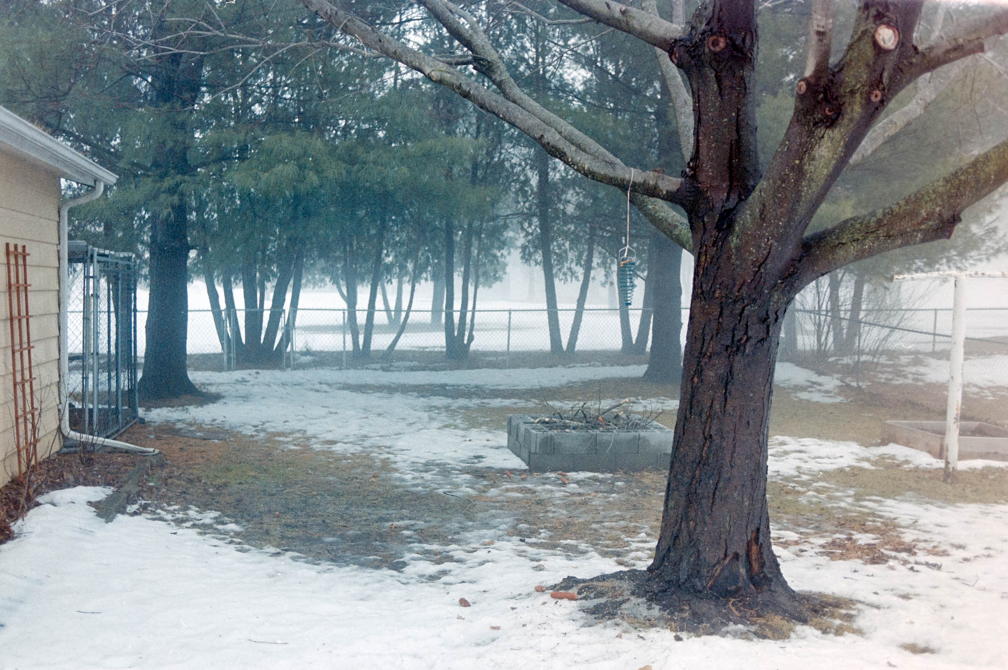 Our backyard in the fog and snow. Camera: Nikon N2020 with Fujifilm Superia 400