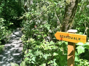 August 17- Guided Nature Walk