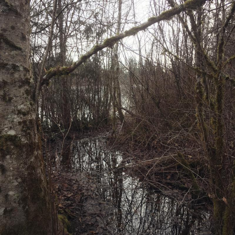 World Wetlands Day: Support a Local Wetland
