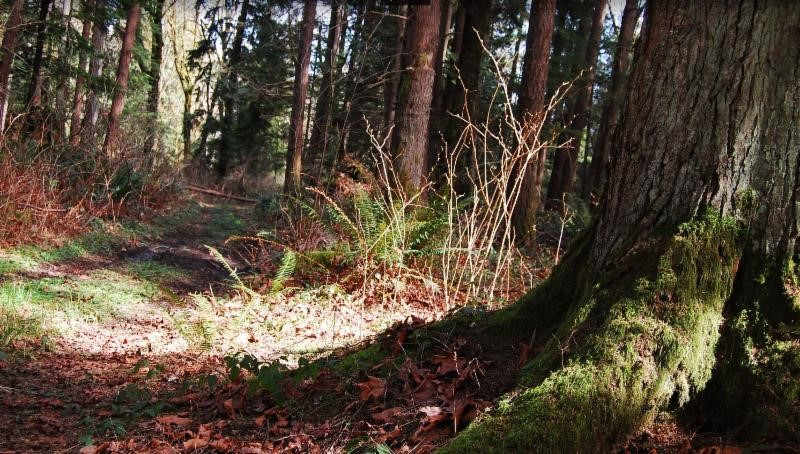 Guided Nature Walks: Tour of the Upland Forest