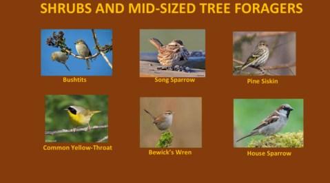 AudubonBirds-8