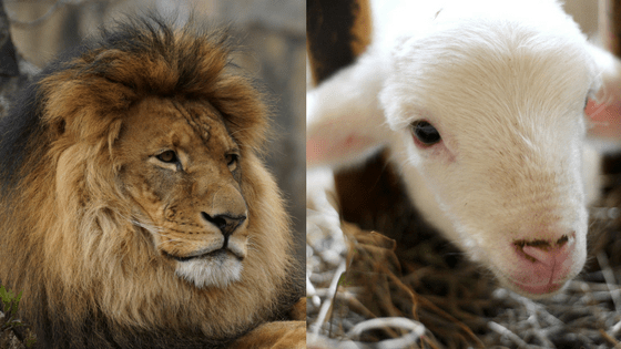 Lamb Of God & Lion Of Judah