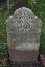 I would have loved to know what Curio looked like. copyright Carole Tyrrell