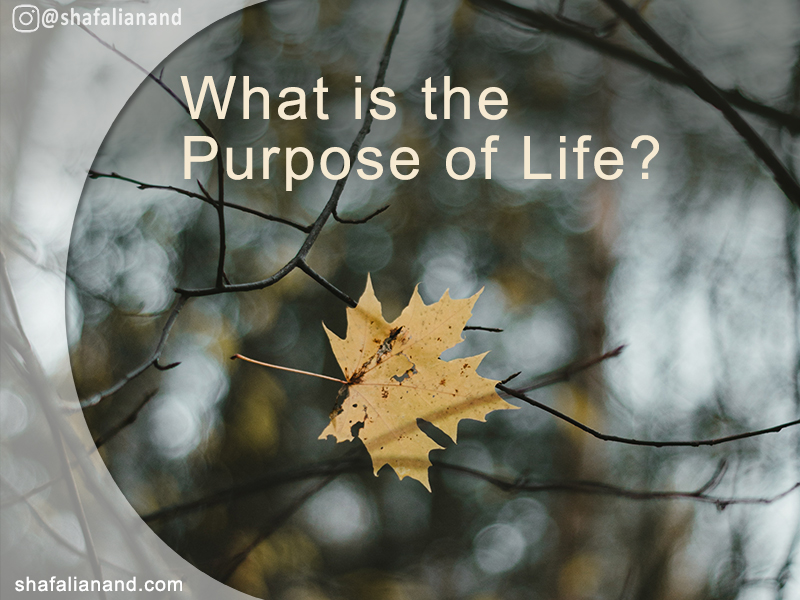 What is the Purpose of Life - Yellow Maple Leaf stuck in branches - Existential Crisis and Questions