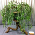 Bonsai Tree 20 Beautiful Weeping Willow Bonsai Ideas