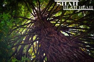 A tree in Capilano Suspension Bridge Park