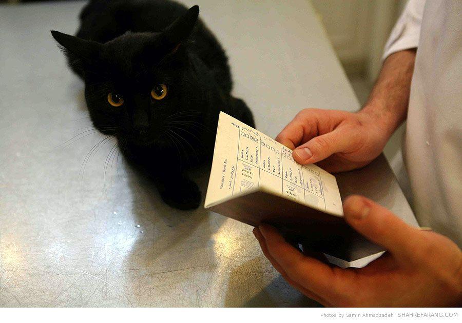 https://i0.wp.com/shahrefarang.s3.amazonaws.com/wp-content/uploads/2014/03/Animal-Hospital-Tehran-9397.jpg