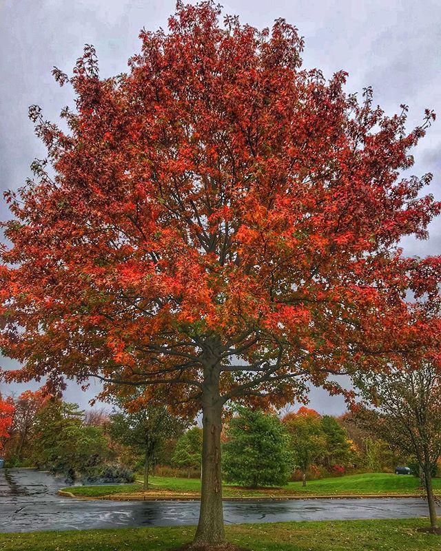 #fall #colourful #trees
