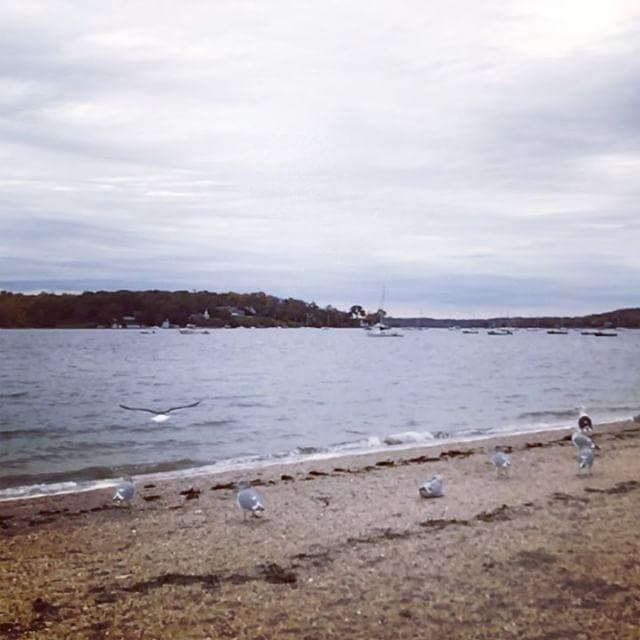 #beach #bird