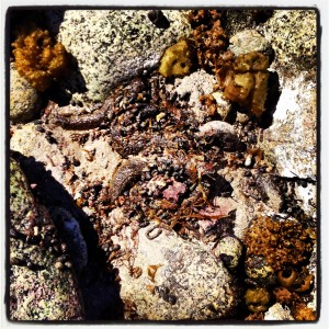 sealife 2 (slugs)
