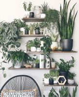 Life Plant Decorations for Indoor in Vertical Hanging Pots Part 55