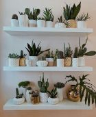Life Plant Decorations for Indoor in Vertical Hanging Pots Part 56