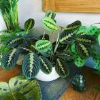 Life Plant Decorations for Indoor in Vertical Hanging Pots Part 64