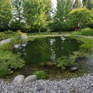 Best trending natural swimming pool with natural fresh cleanwater filter system (10)