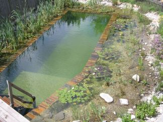 Best trending natural swimming pool with natural fresh cleanwater filter system (5)