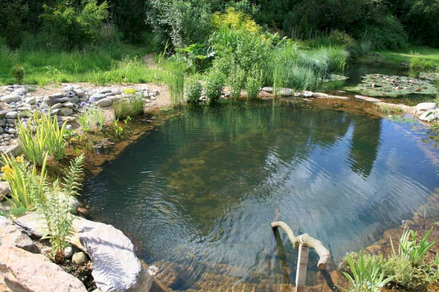 Best trending natural swimming pool with natural fresh cleanwater filter system (8)