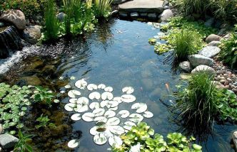 Best water garden style rich of natural accents with stones and aquatic plants compositions Image 1