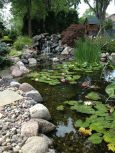 Best water garden style rich of natural accents with stones and aquatic plants compositions Image 17
