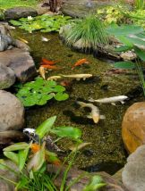 Brilliant landscape decoration of natural small fish ponds that you can make yourself Image 6