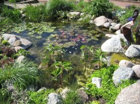 Water garden ideas for more natural backyard feeling with beautiful aquatic plants and ponds Image 21