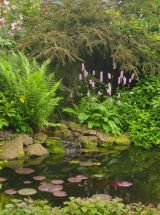 Water garden ideas for more natural backyard feeling with beautiful aquatic plants and ponds Image 28