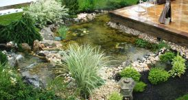 Water garden ideas for more natural backyard feeling with beautiful aquatic plants and ponds Image 32