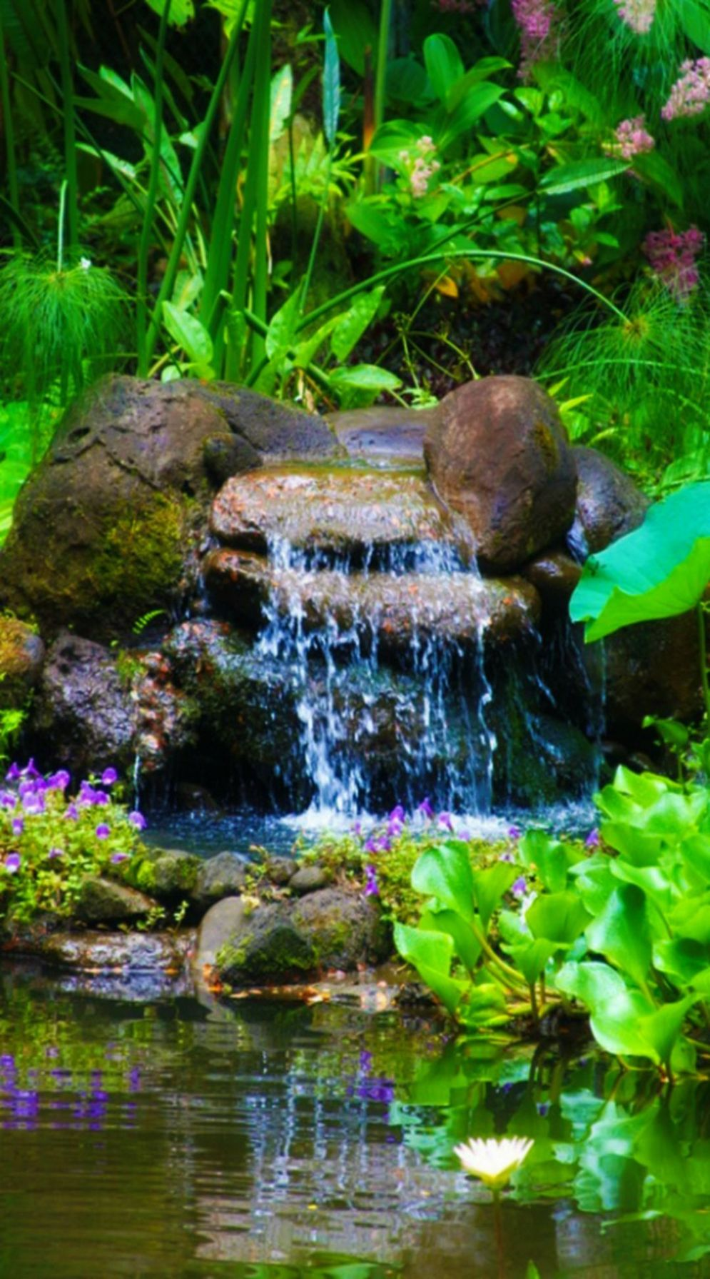 Water garden ideas for more natural backyard feeling with beautiful aquatic plants and ponds Image 35