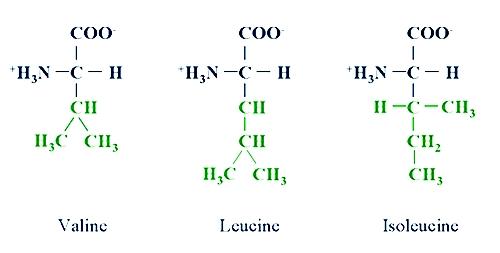 amino acid leucine, valine isoleucine