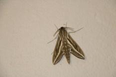 Motte (1)