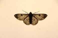 Motte (9)