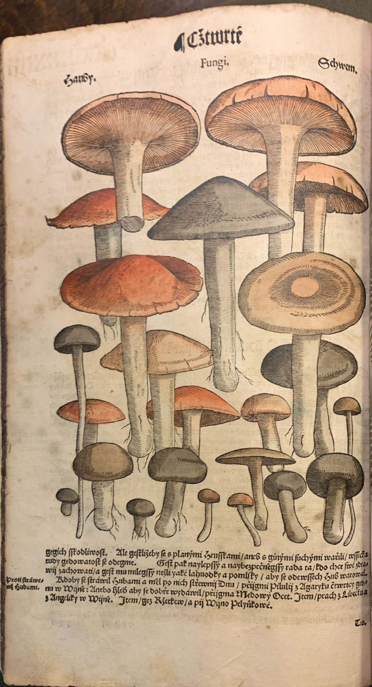 Illustration of mushrooms in a Czech herbal