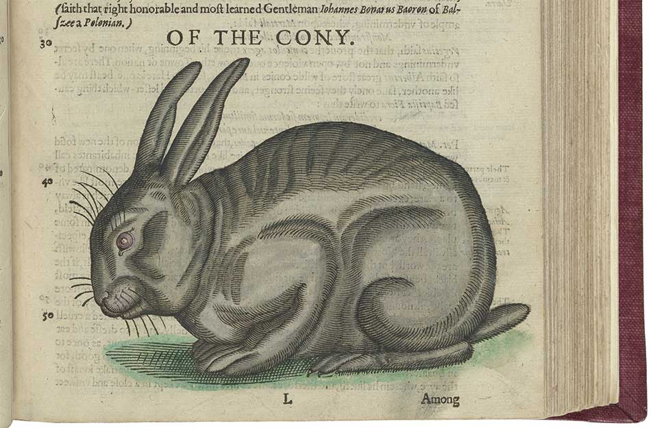A picture of a cony