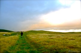 Yorkshire Moors, England