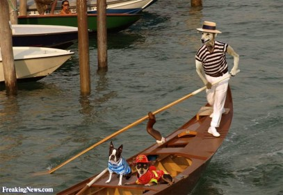dog-steering-a-gondola-in-venice-94455