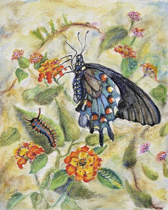 pipevine swallowtail, shakti sarkin