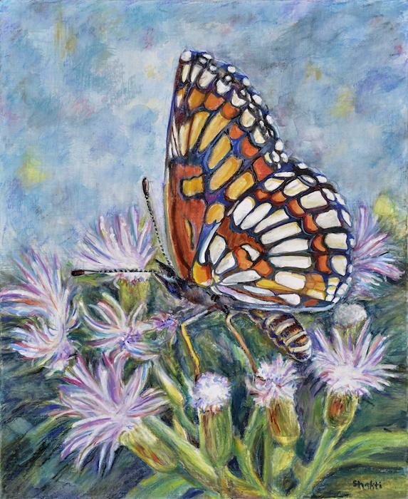 theona checkerspot butterfly, shakti sarkin