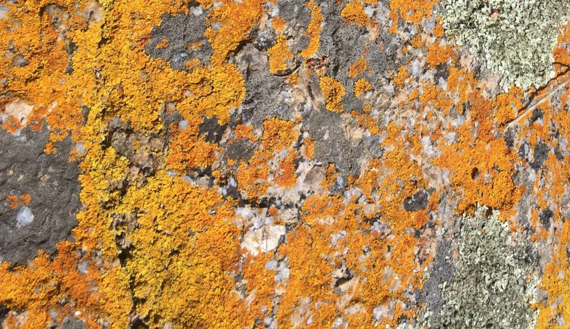 Autumn yin lichen