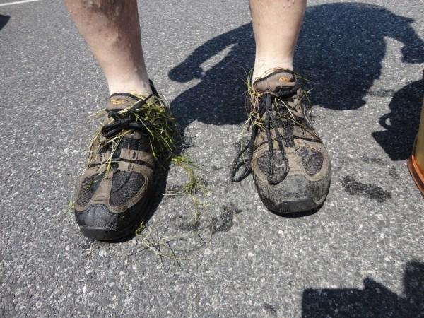 seaweed shoes