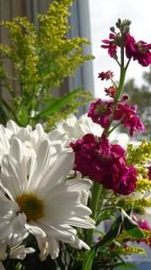 Daisies, stock, and soldago