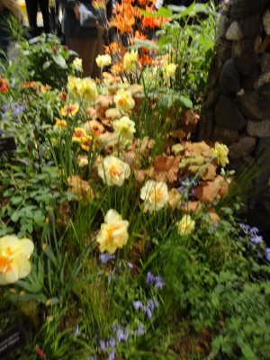 Blurry beautiful flowers